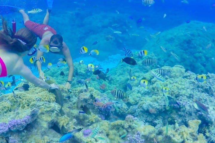 Lagoon Snorkelling Tour