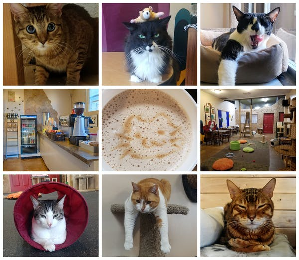 The Cat Cafe | Kitty Cafe & Cat Adoption San Diego