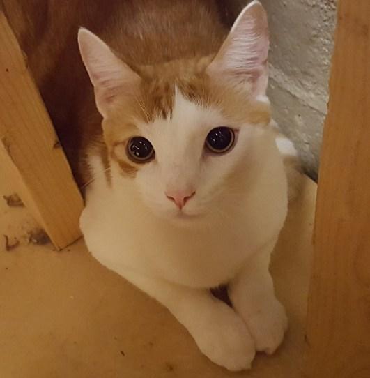 Meet Noah at The Cat Cafe