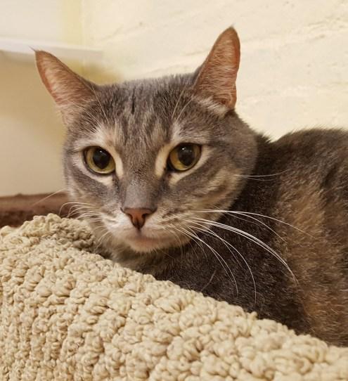 Meet Cora at The Cat Cafe