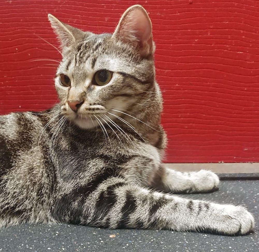 Meet Lupita at The Cat Cafe