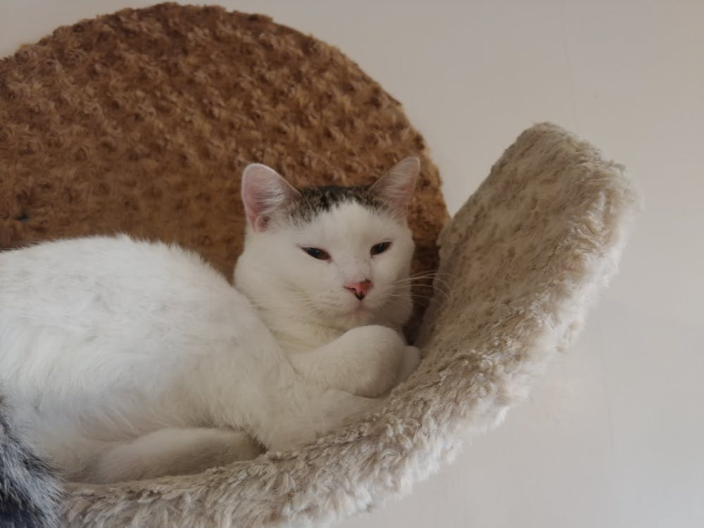 Meet Luis at The Cat Cafe