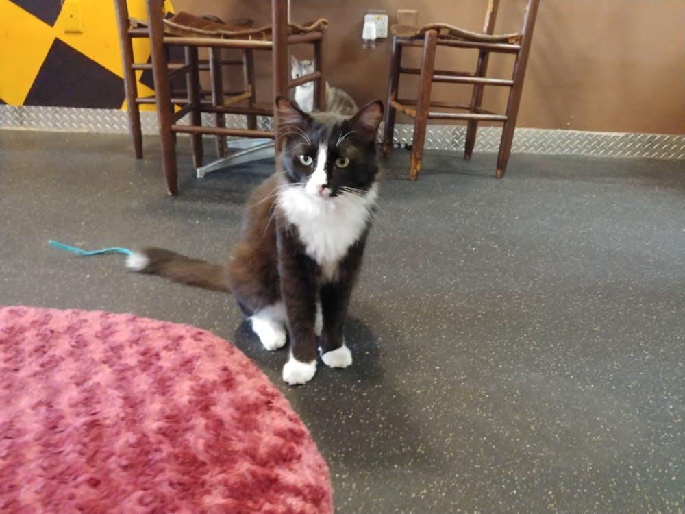 Meet Armani at The Cat Cafe