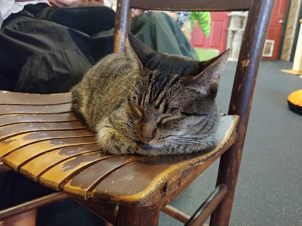 Meet Estella at The Cat Cafe