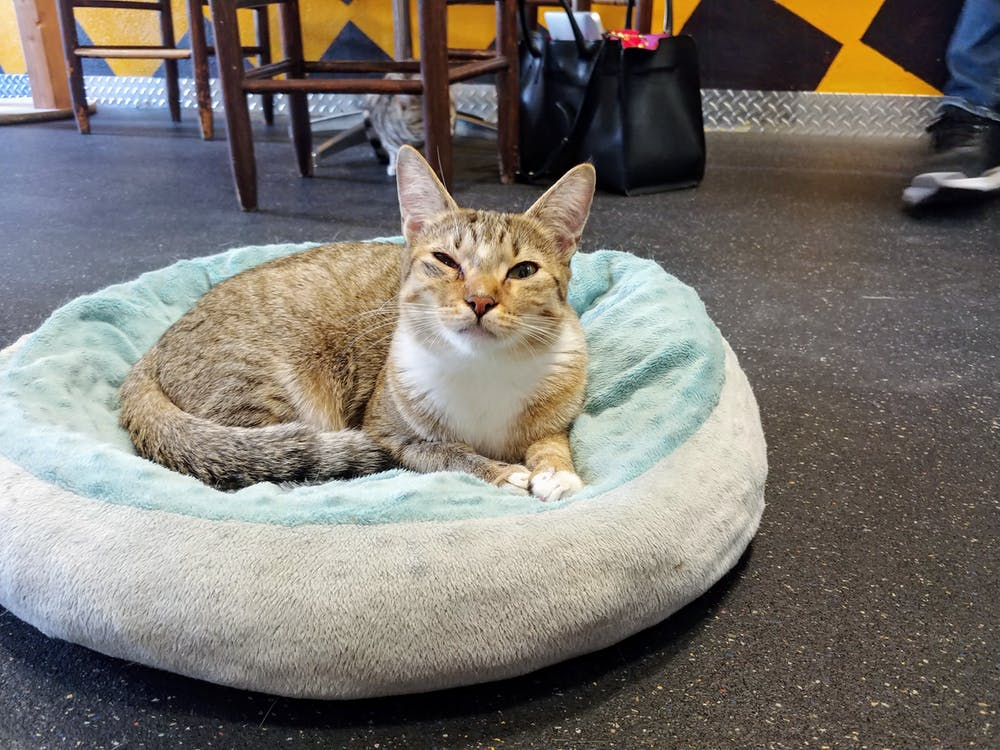 Meet Arianna at The Cat Cafe
