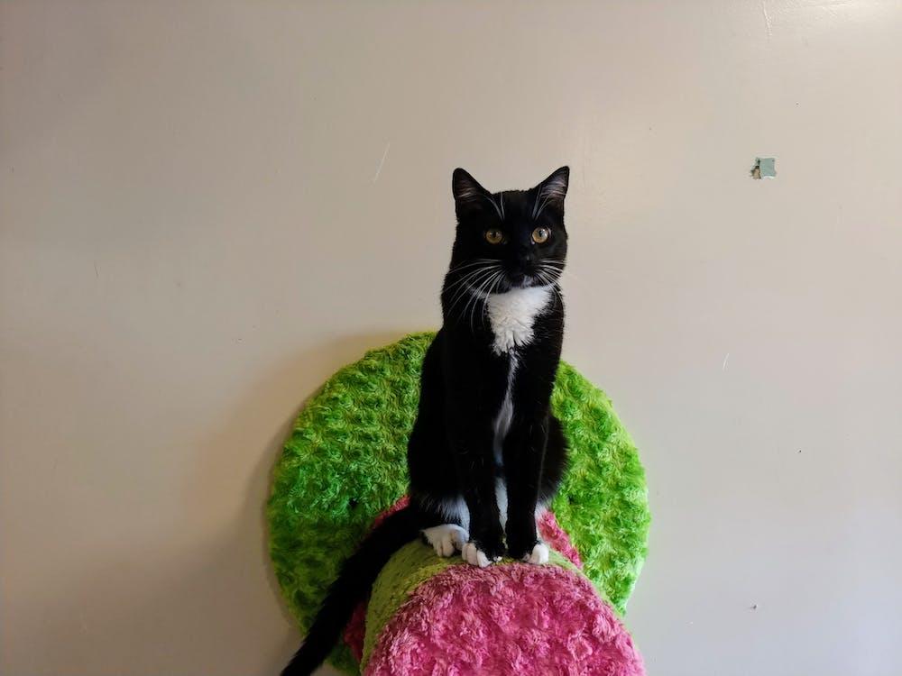 Meet Barrel at The Cat Cafe