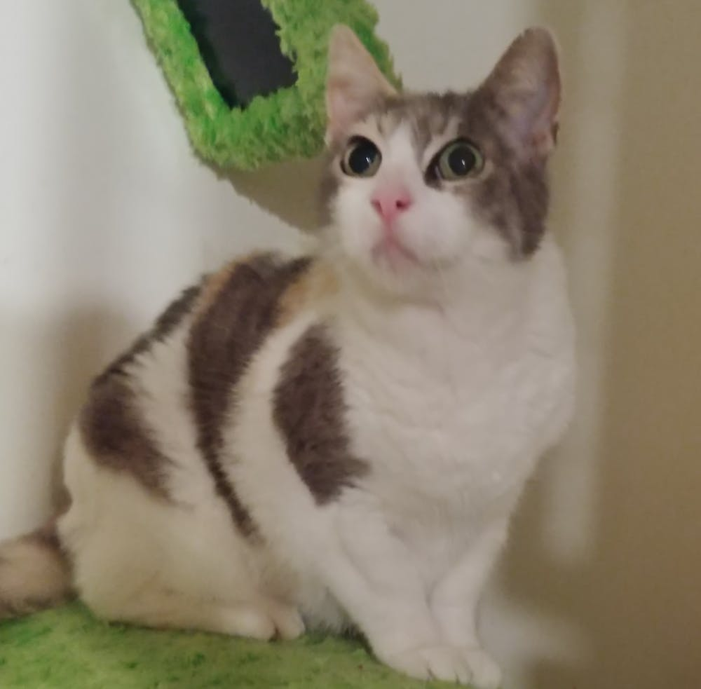 Meet Madeline at The Cat Cafe