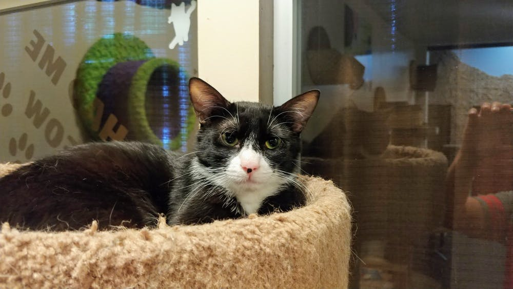 Meet Tux at The Cat Cafe