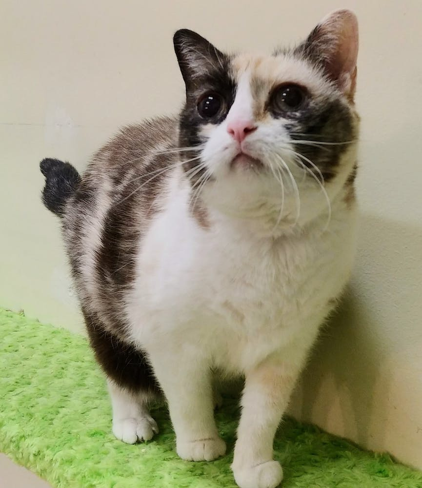 Meet Mona at The Cat Cafe