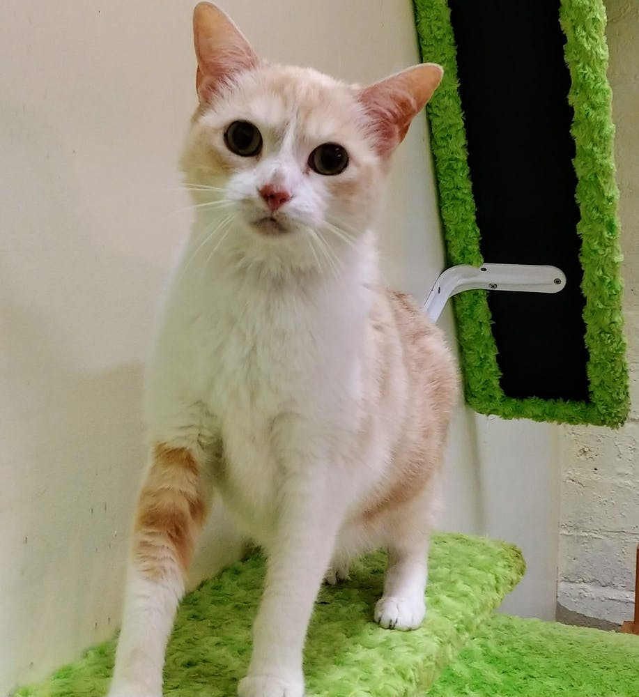 Meet Lucy at The Cat Cafe