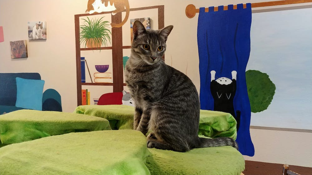 Meet Grace at The Cat Cafe