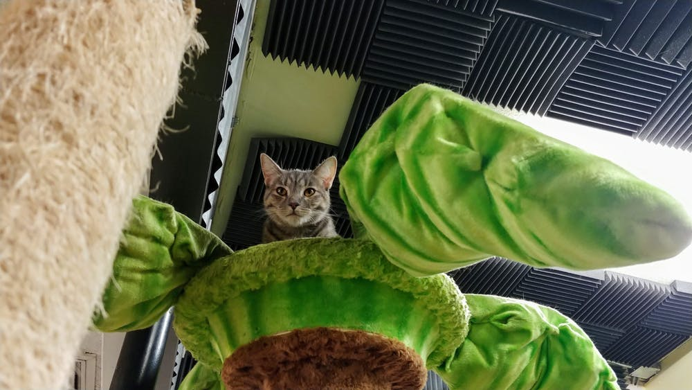 Meet Luna at The Cat Cafe