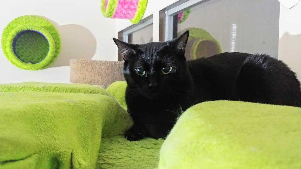 Meet Nika at The Cat Cafe