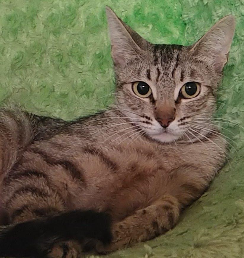 Meet Savannah at The Cat Cafe