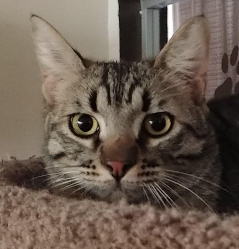 Meet Desi at The Cat Cafe