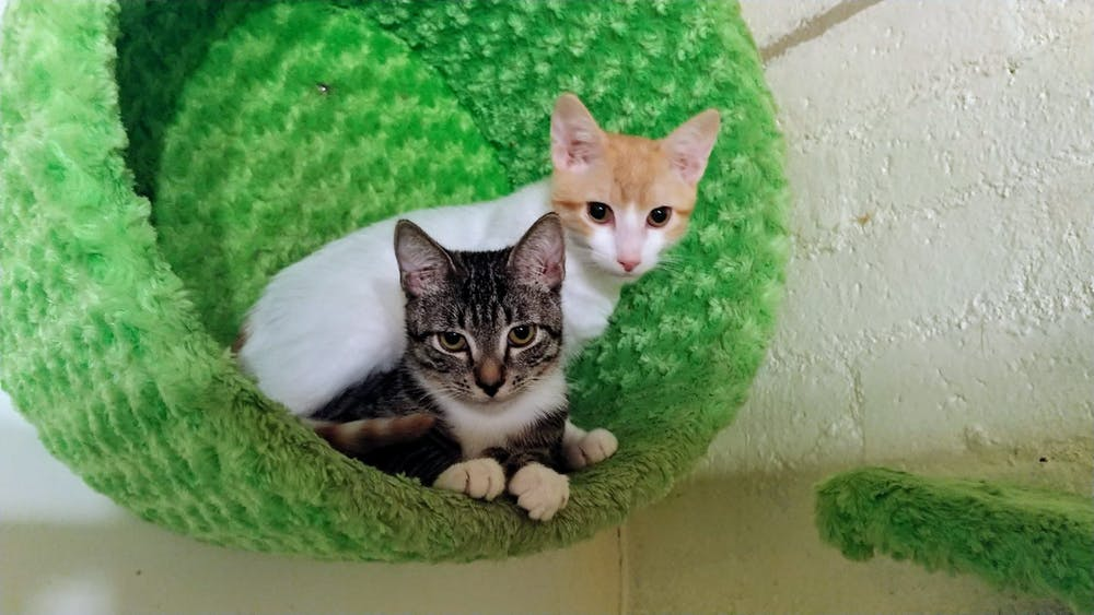 Meet Ollie and Lilo at The Cat Cafe