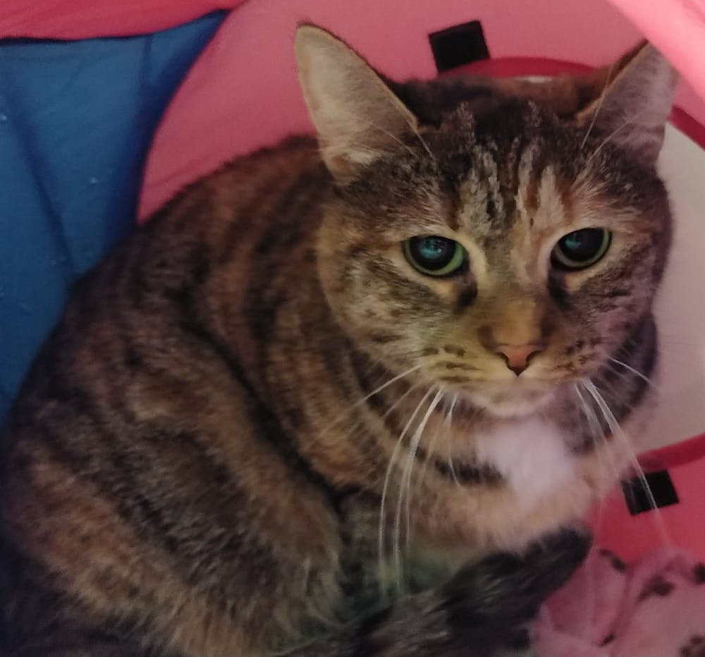 Meet Mila at The Cat Cafe