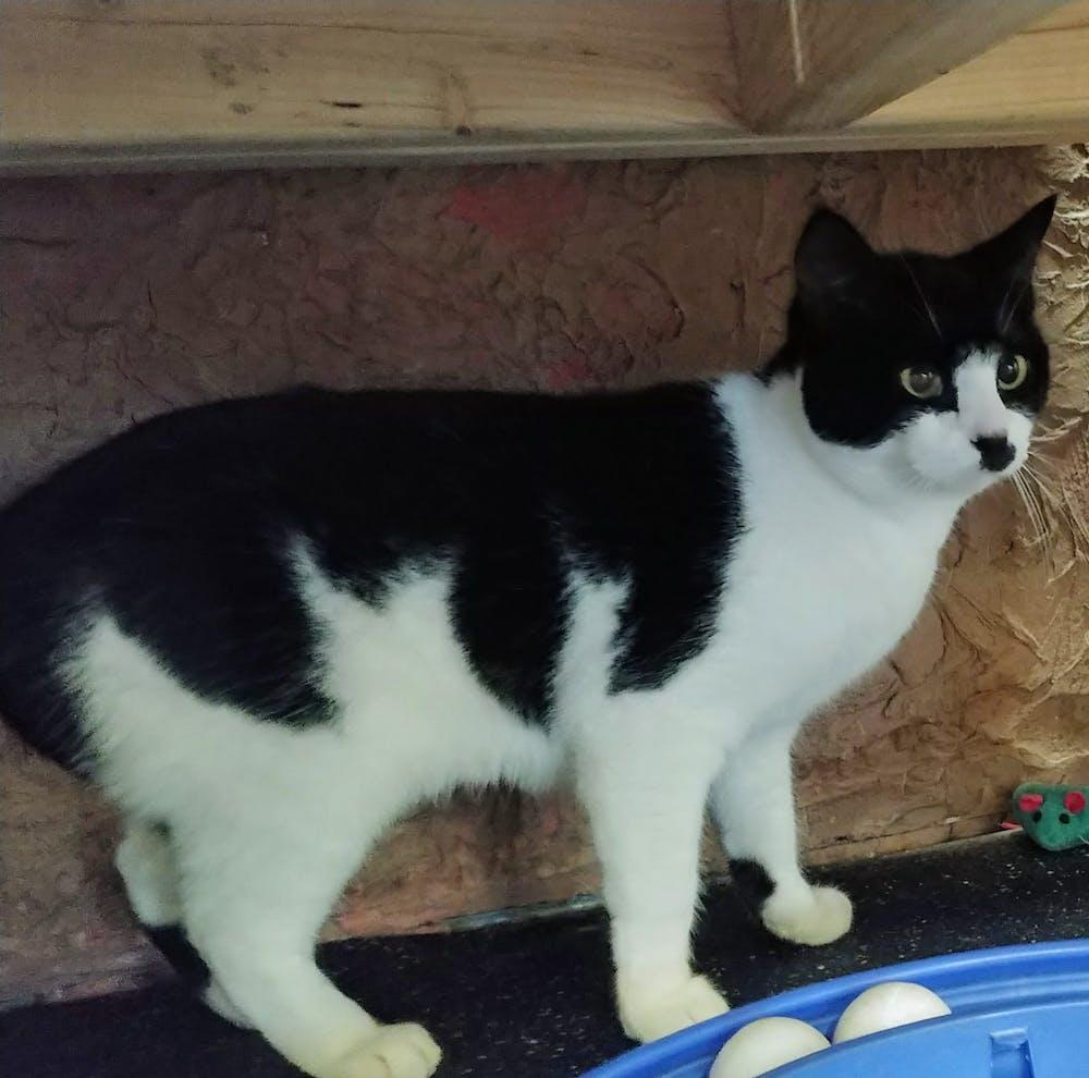 Meet Adorabella at The Cat Cafe