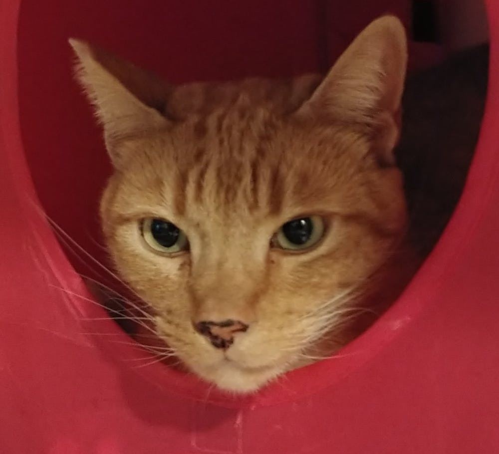 Meet Julius Caesar at The Cat Cafe