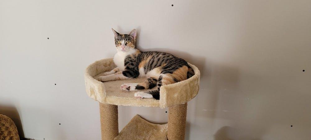 Meet Nina at The Cat Cafe