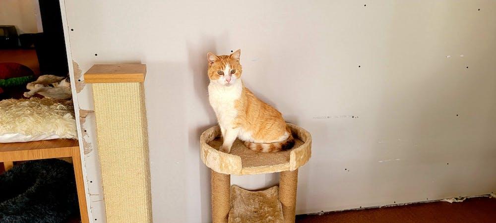 Meet Casanova at The Cat Cafe