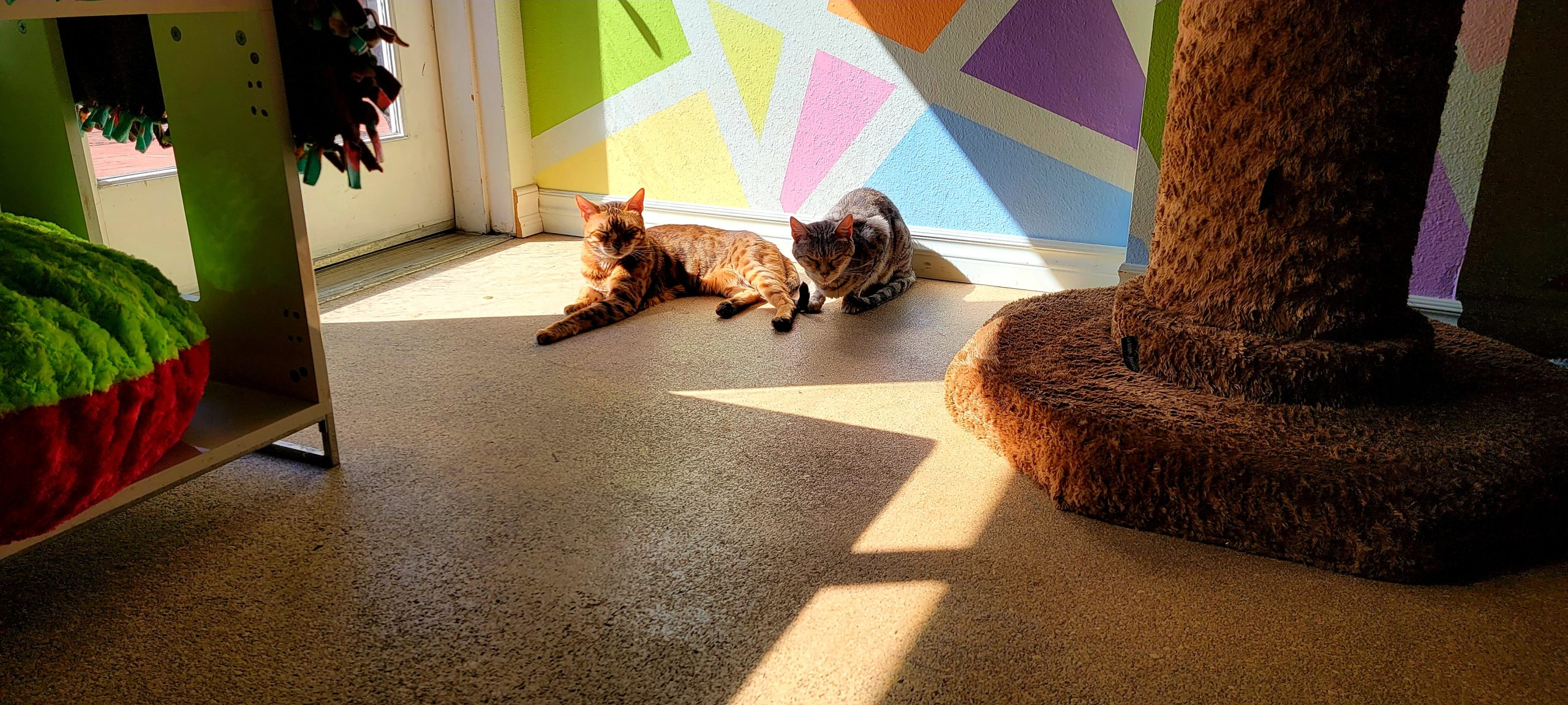 Meet Jacey and Leo at The Cat Cafe