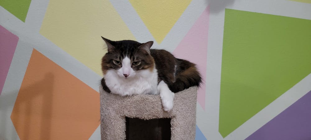 Meet Bender at The Cat Cafe