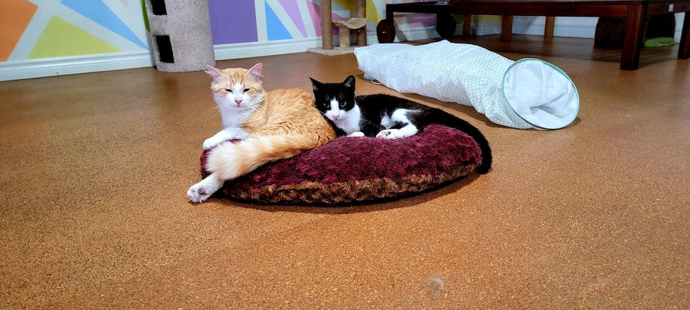 Meet Clive and Clint at The Cat Cafe