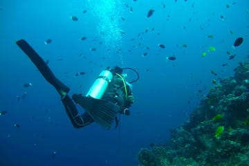 Scuba diver near coral
