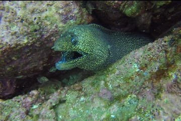 Eel in rock underwater