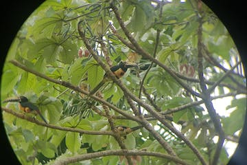 a bird sitting on a tree branch