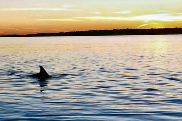 Dolphin in water at sunset