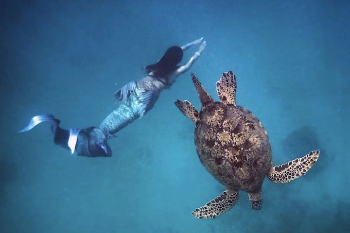 mermaid and turtle swimming in ocean