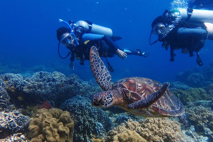 2 divers and a turtle