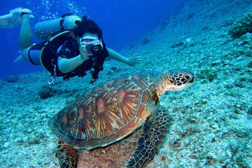 Diver takes the photo of the turtle