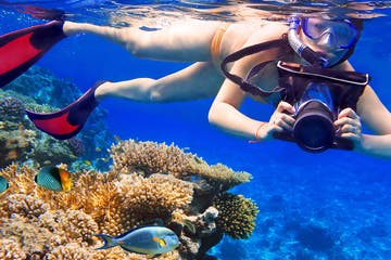 Photography Snorkler and fish
