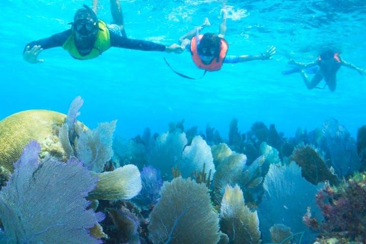 Cozumel Snorkeling Tour   Stingray Beach