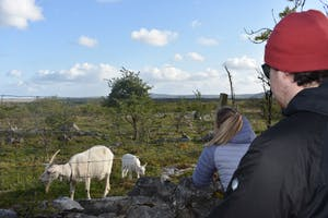 a man standing next to a sheep