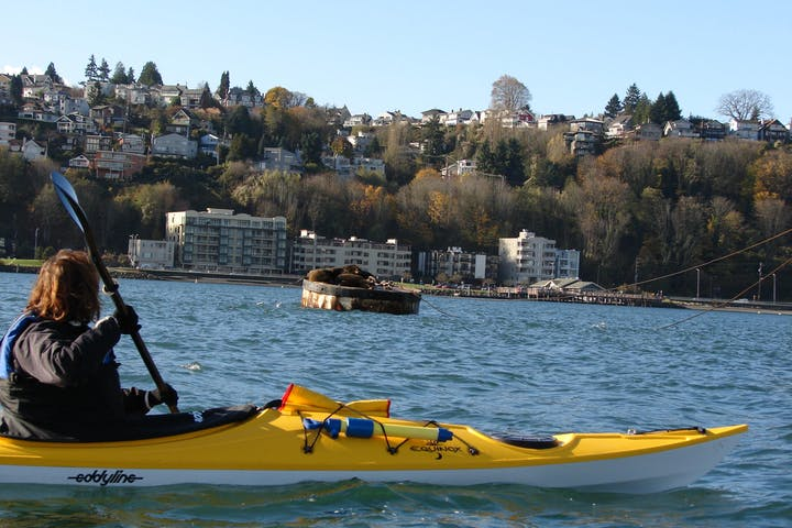 Woman staring at sea lions from a kayak