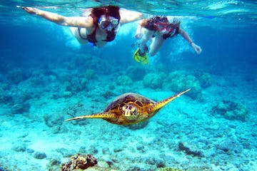 snorkeling Mexico Rocks with turtle