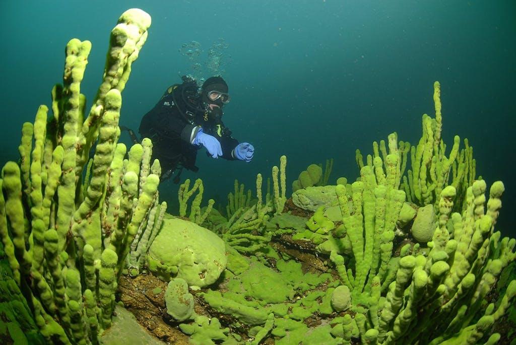 Baikal deep diving