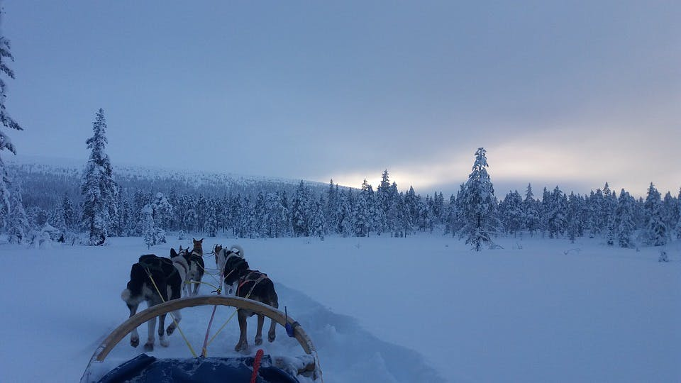 It is known that husky dogs can travel distances of about 250 kilometers per day.