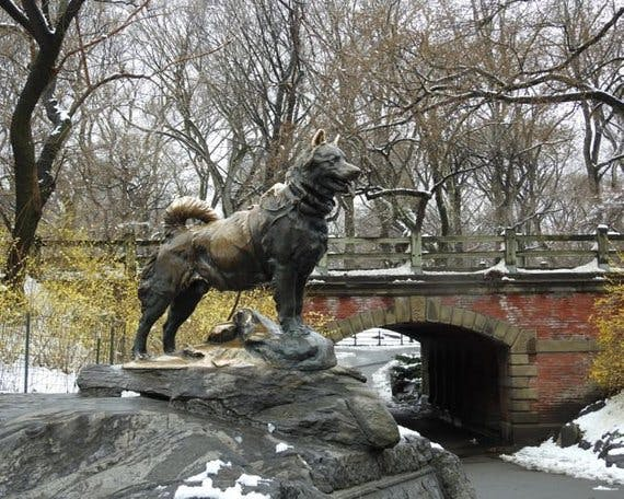 Monument to the dog in central park