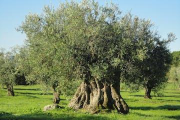 évora Tour Olive Oil Farm Portugal Farm Experiences