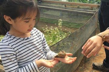 Shiitake Mushroom & Snail Farm tour