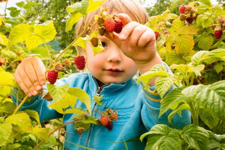 kid and a Raspberry