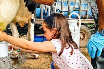 enjoying a dairy farm tour in Azores