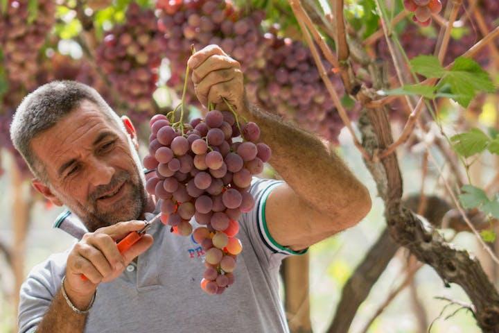 People enjoying a tour in a vineyard