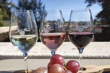vineyard tour portugal