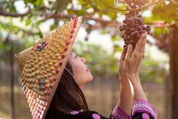 A woman looks grapes